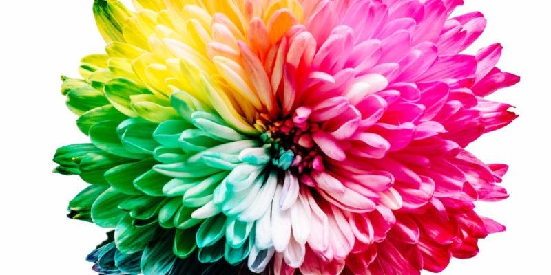 Chakra blomst