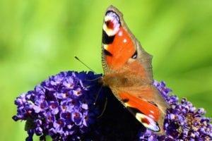 Sommerfugl står for transformation